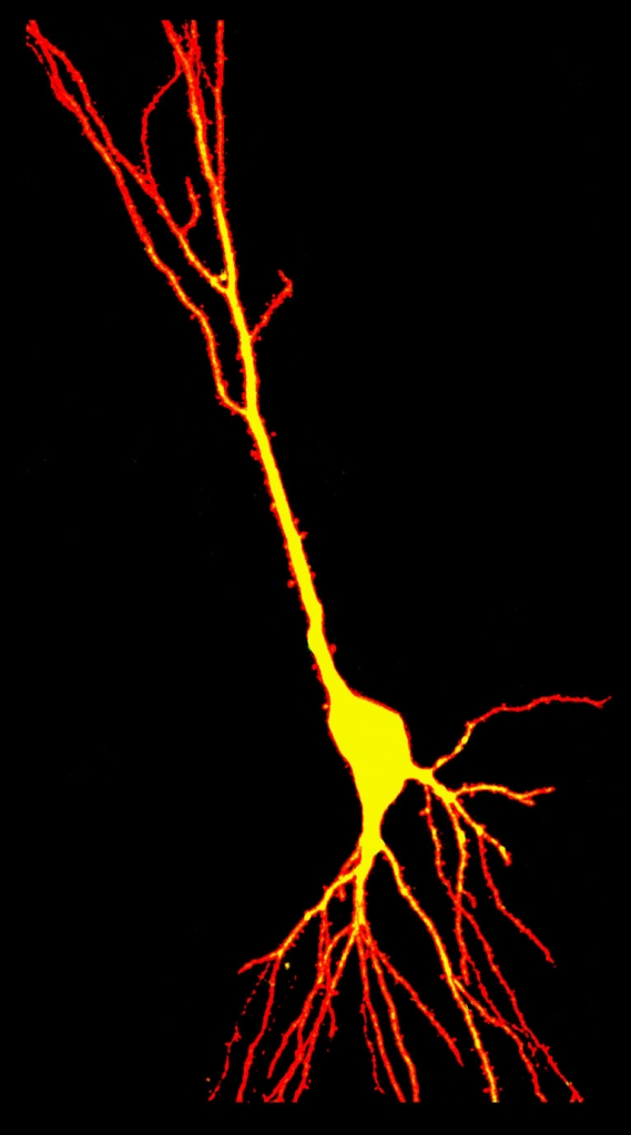 Red Neuron