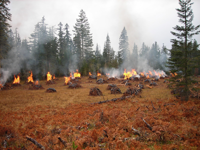 Slash piles burning