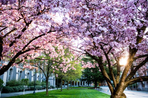 All spring quarter classes to be held remotely
