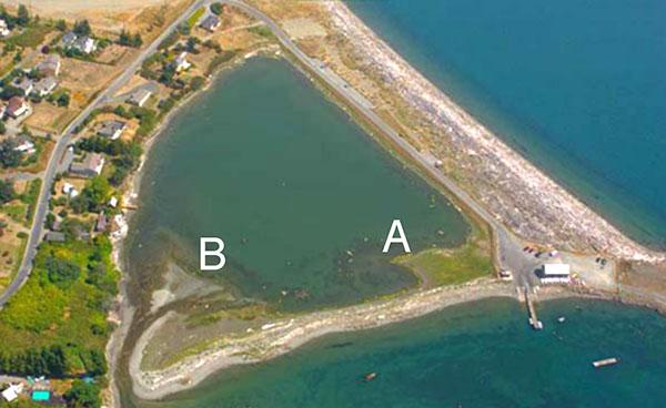 Study sites at Argyle Lagoon