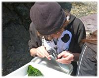 distribution and abundance of marine invertebrates biology essay Pdf   on aug 1, 2013, jeffrey levinton and others published marine biology: function, biodiversity, ecology, 4th edition, 2013 front matter  diversity of benthic marine invertebrates 255.