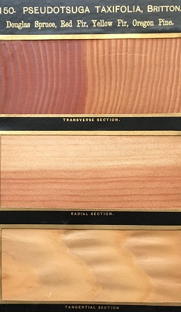 Wood samples from Hough's  American Woods