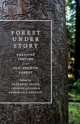 Forest Under Story cover
