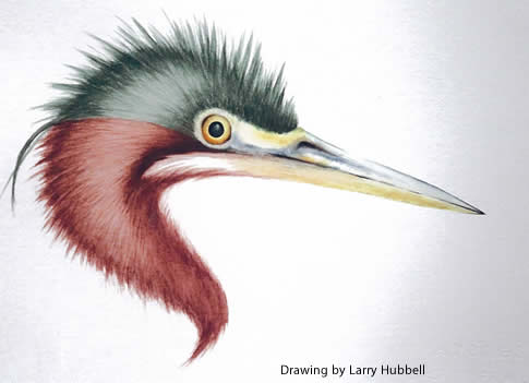 Larry Hubbell drawing