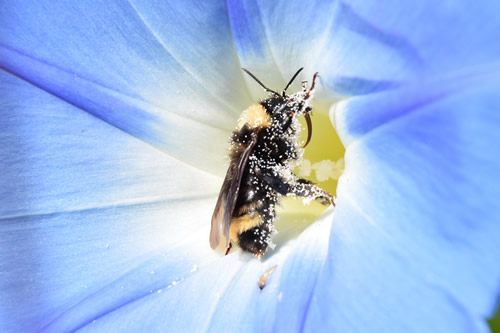 bee and flower photograph by Robby Wrench