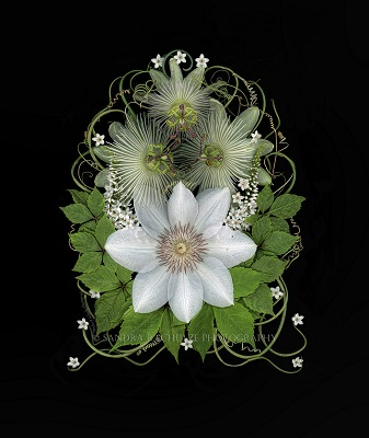 Sandra Schulze passionflowers and clematis