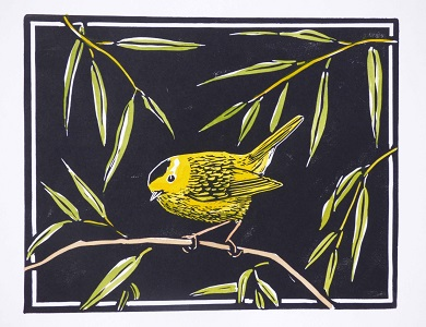 Molly Hashimoto's Wilson's Warbler and Willows