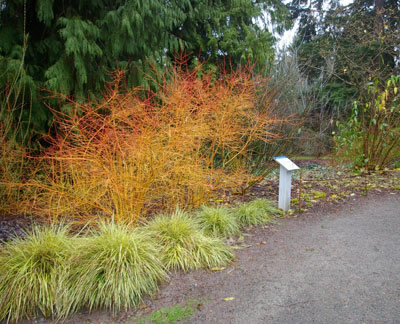 New Directions – Plants for Winter Garden