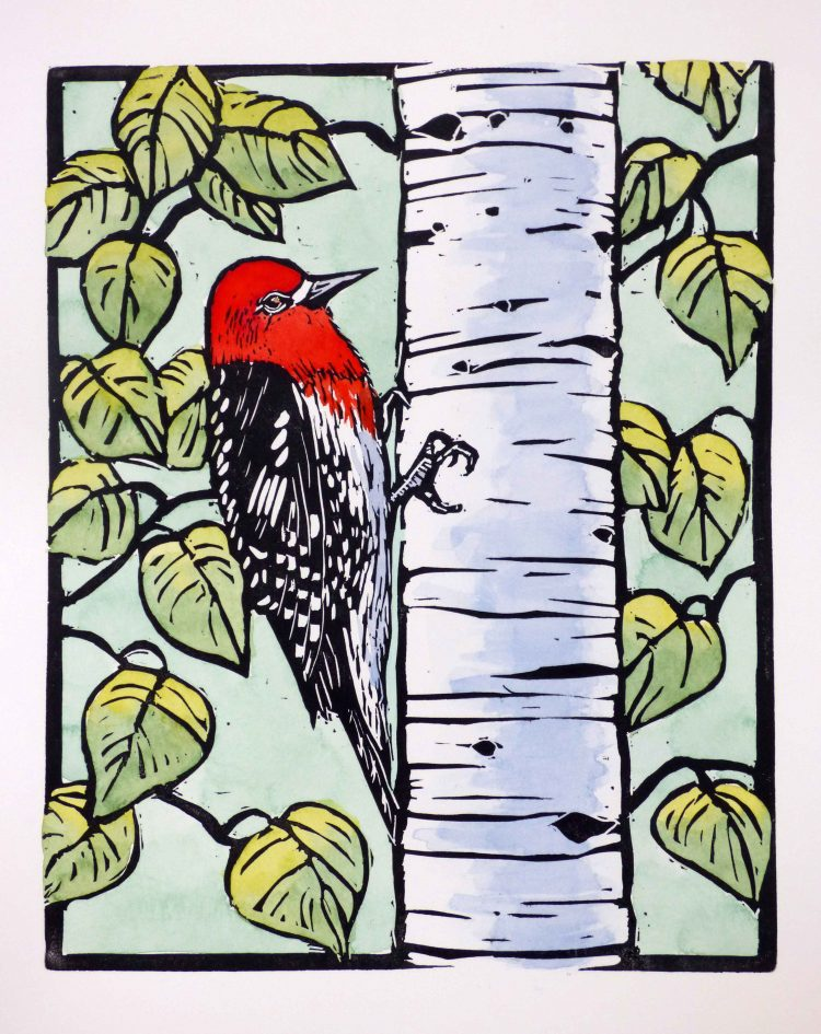 red headed bird perched on birch trunk