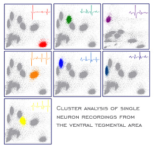 Cluster analysis of single neuron recordings from the ventral tegmental area.