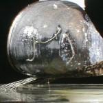 Musselbyssus