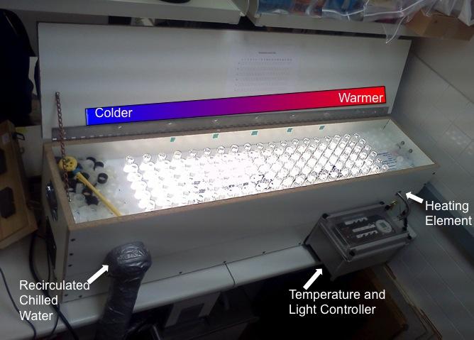 An apparatus called a temperature gradient bar (TGB)