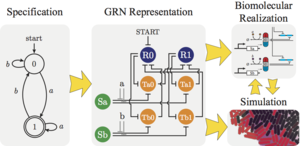 A Framework for Implementing Finite State Machines in Gene Regulatory Networks