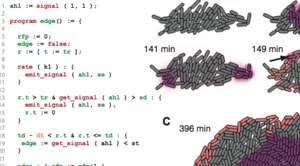 gro: Specification and Programming of Multi-celled Behavior