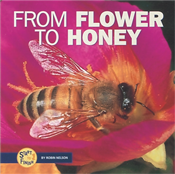 Cover of From Flower to Honey