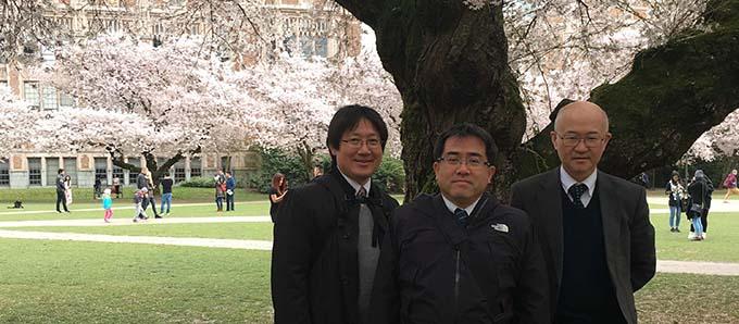Quad Cherry Blossoms