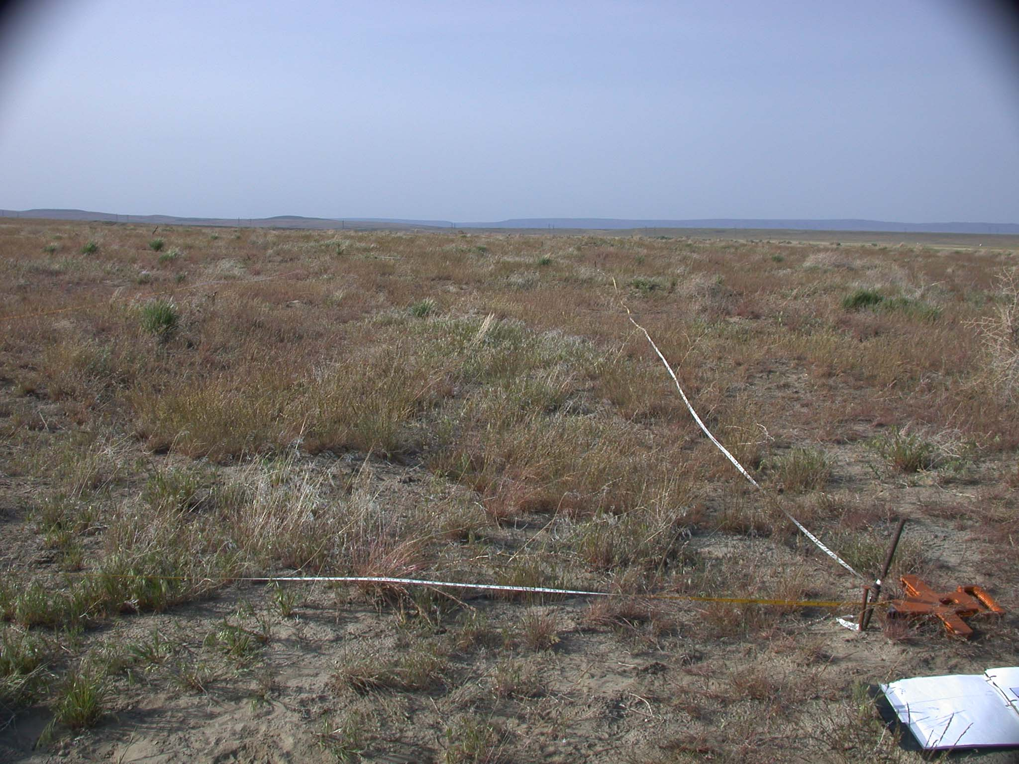 The same plot as above in 2002 shrub cover has been entirely lost and there is significant cover of cheatgrass. Photo by Jim Evans.