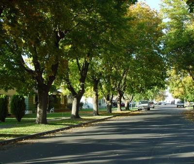local economics green cities good health