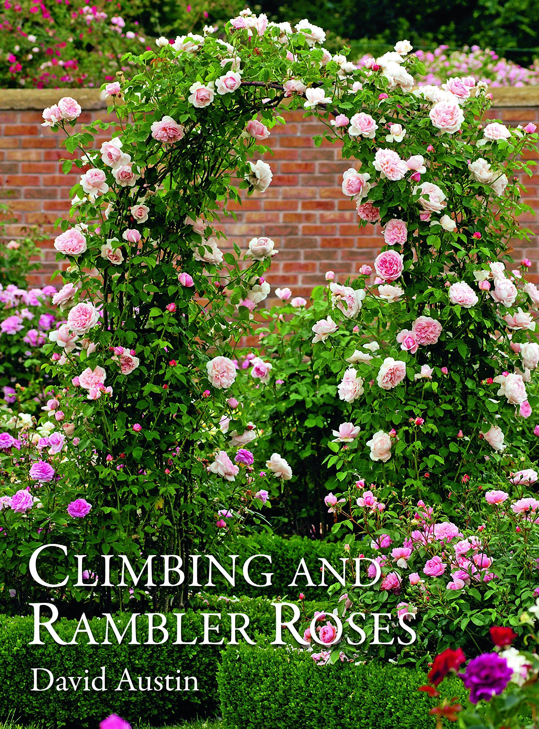Climbing and rambler roses / David Austin.