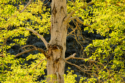 Tree with yellow leaves photo by Richard Dunford