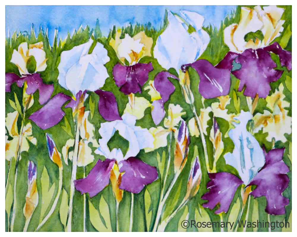 water color painting of purple and white irises by Rosemary Washington