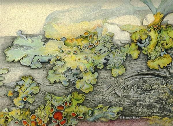 lichen on a branch by sharon birzer