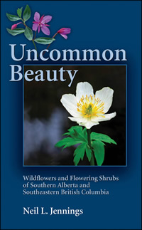 Uncommon beauty cover