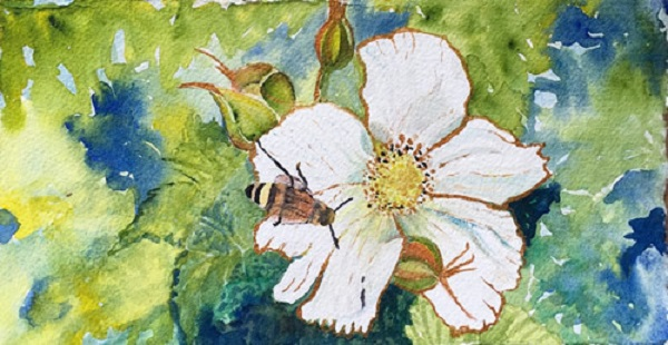 Rose by Linda Andrews