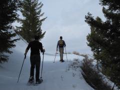 Snowshoe Adventures in Yellowstone