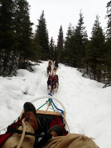 Dogsledding with John Bramante!