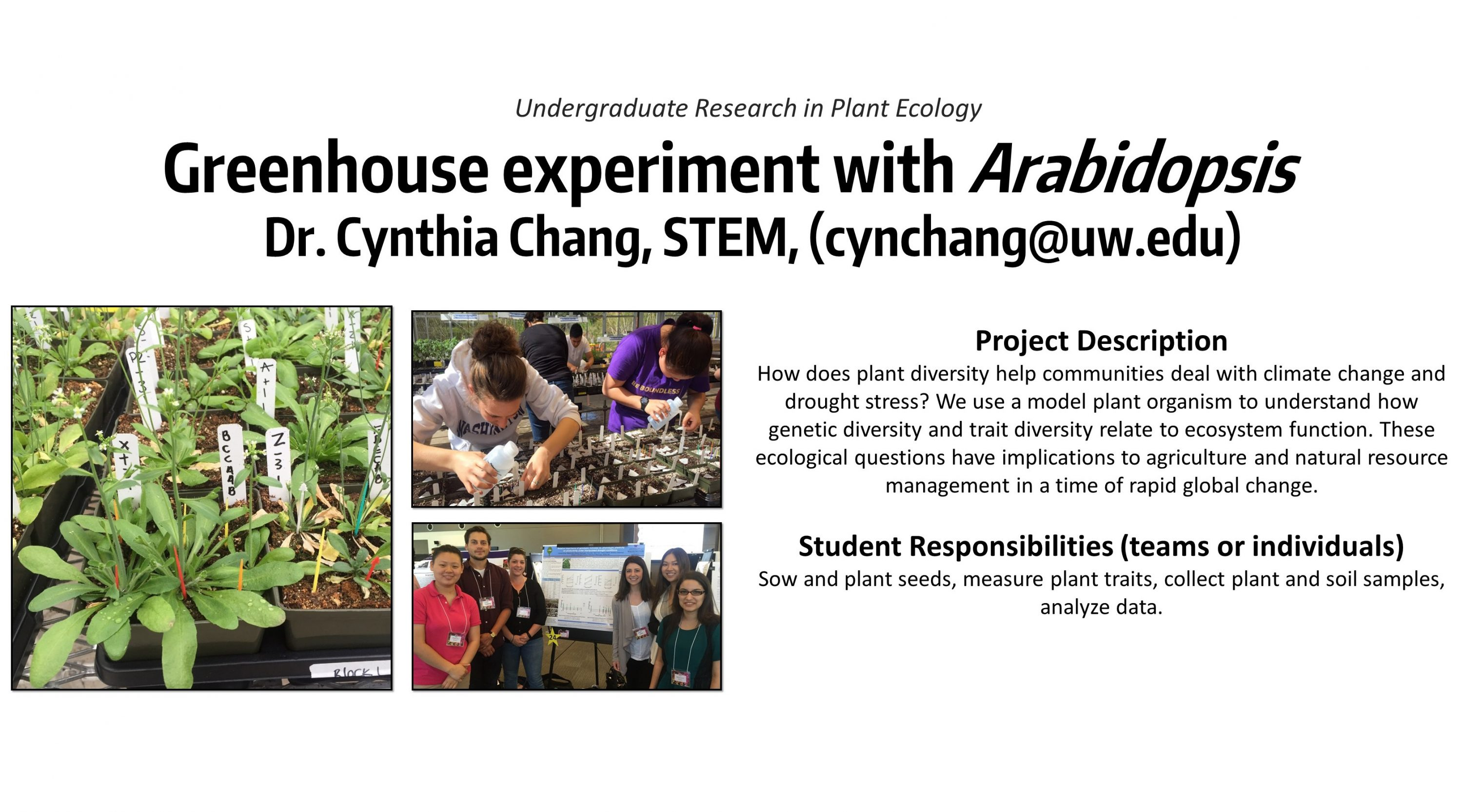 Greenhouse Experiment with Arabidopsis – UW Bothell Office